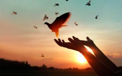 سابلیمینال بخشش (رهایی از کینه و نفرت)